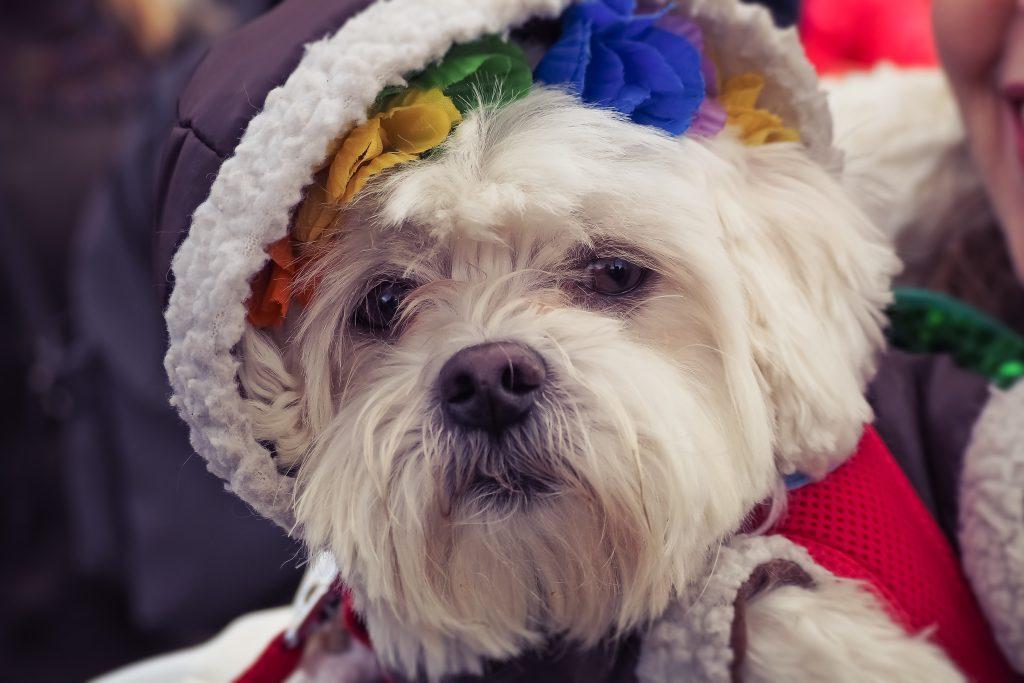Ter um mascote desses é o único amor verdadeiro que você consegue comprar. Cachorro é tudo de bom!